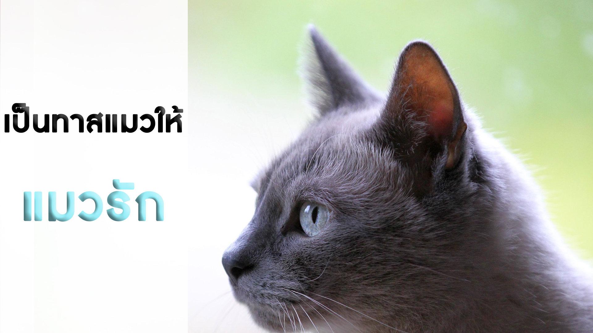 เป็นทาสแมวให้แมวรัก